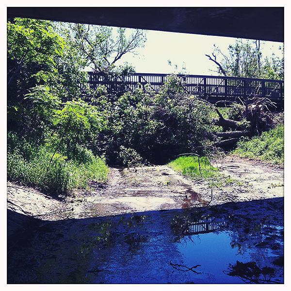 Op een fietstocht later in de week bleek zo goed als elk fietspad versperd door omgevallen bomen.