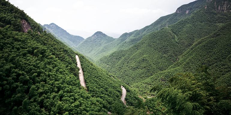 07-bamboo-hills