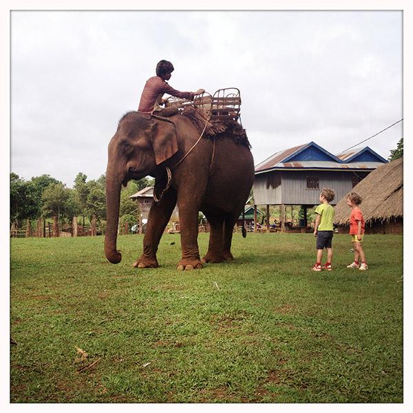 afscheidolifant
