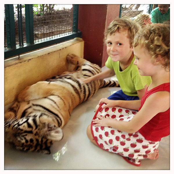 Chiang Mai - Tiger Kingdom - tijgers strelen met kinderen