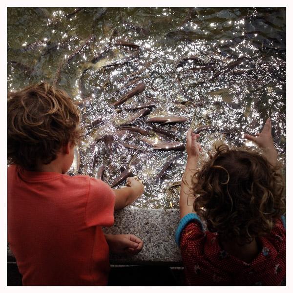 Thewet-vissen